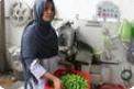 全球就业适龄妇女进入劳动力市场比例仍不足50% 25年几乎没有变化