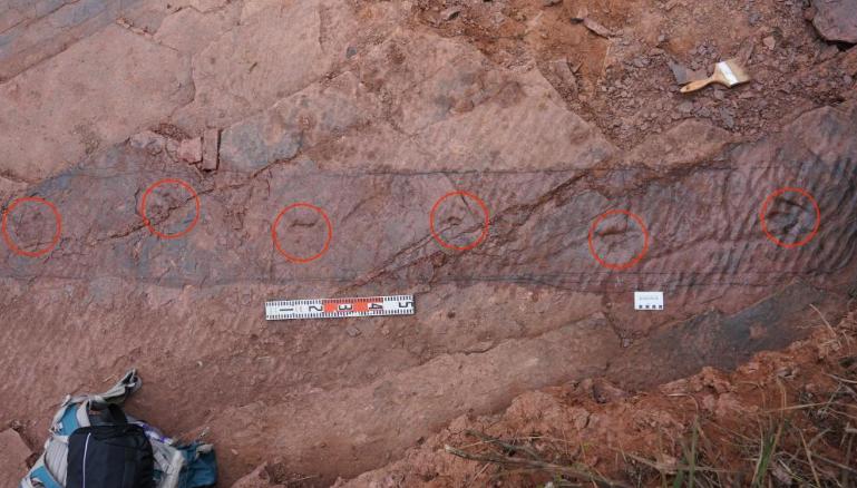 1亿年前恐龙留下一串脚印 科学家测出它的行走速度