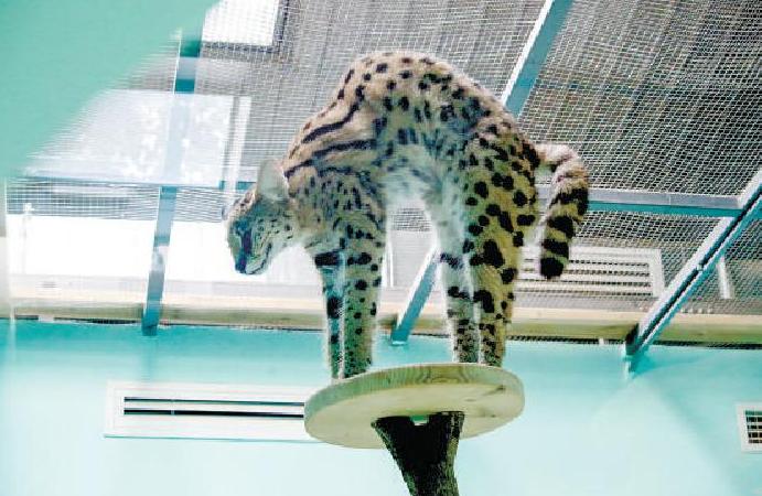 北京今年救护野生动物2384只 进一步强化野外巡查和看守